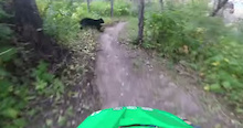 Video: Oh Shit, a Bear!